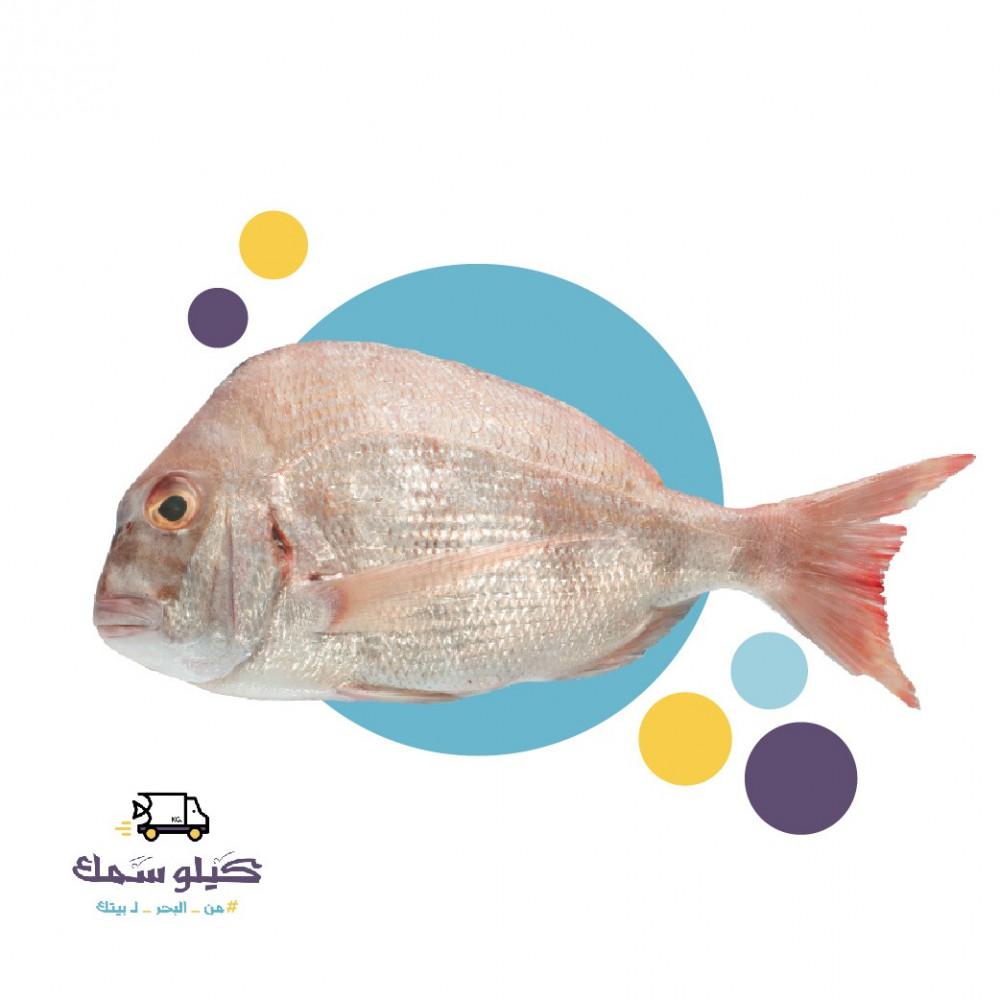 سمك عندق كبير-Andak L