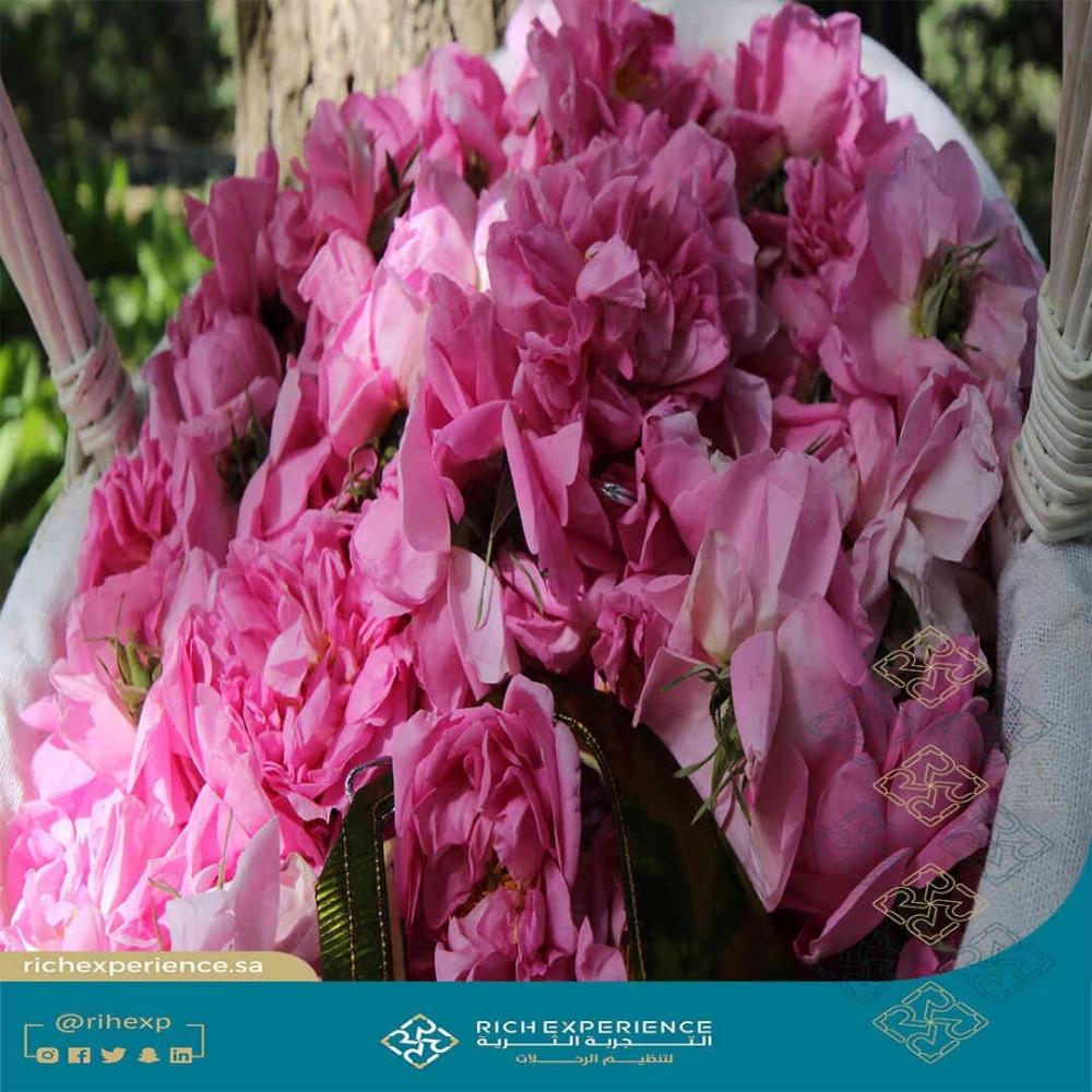 زهور الطائف