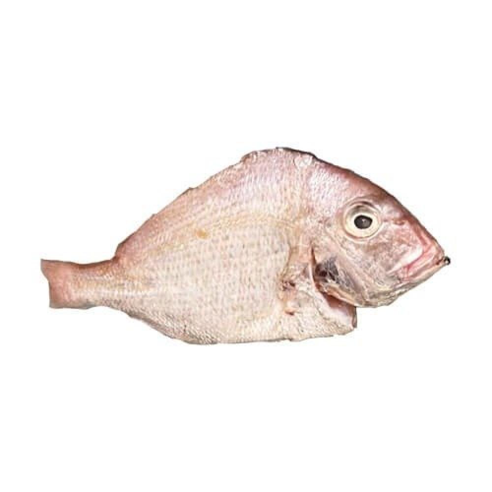 سمك عندق عندك
