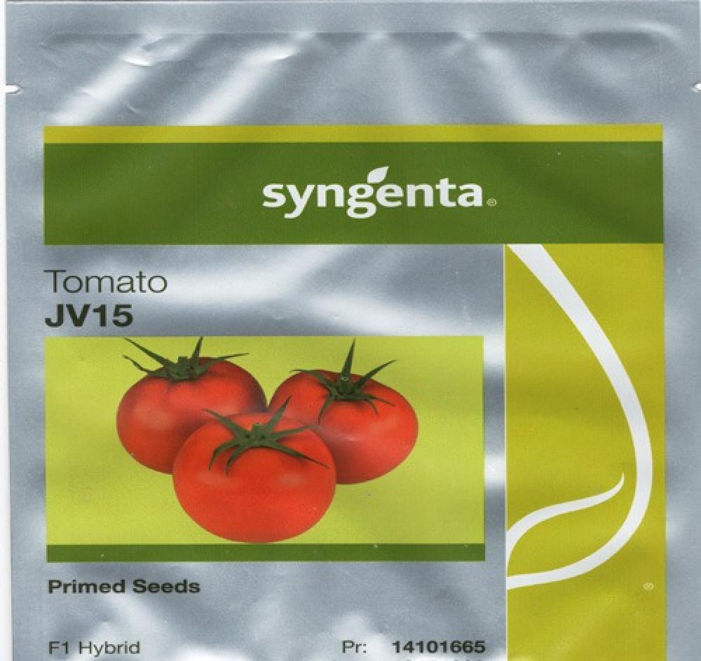 طماطم جي في 15 JF15  هجين