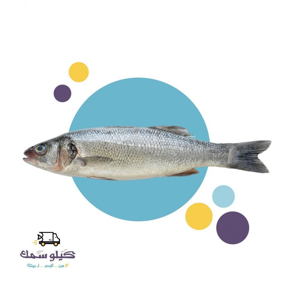 سمك سيباس طازج