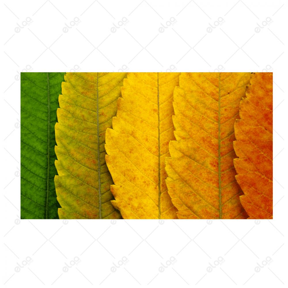لوحة فن تجريدي لأوراق شجر بالوان الاصفر والاخضر والاحمر