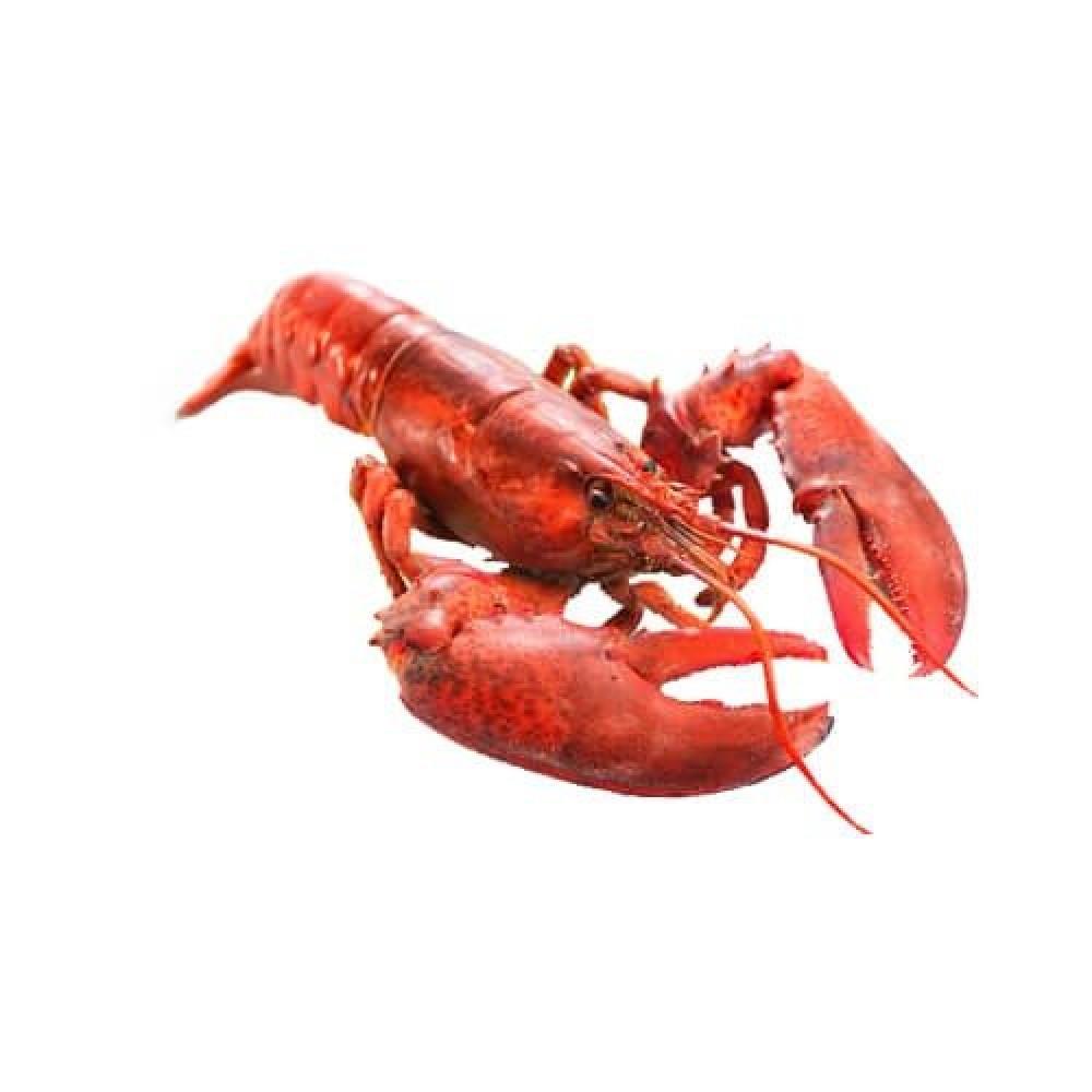 استاكوزا Lobster