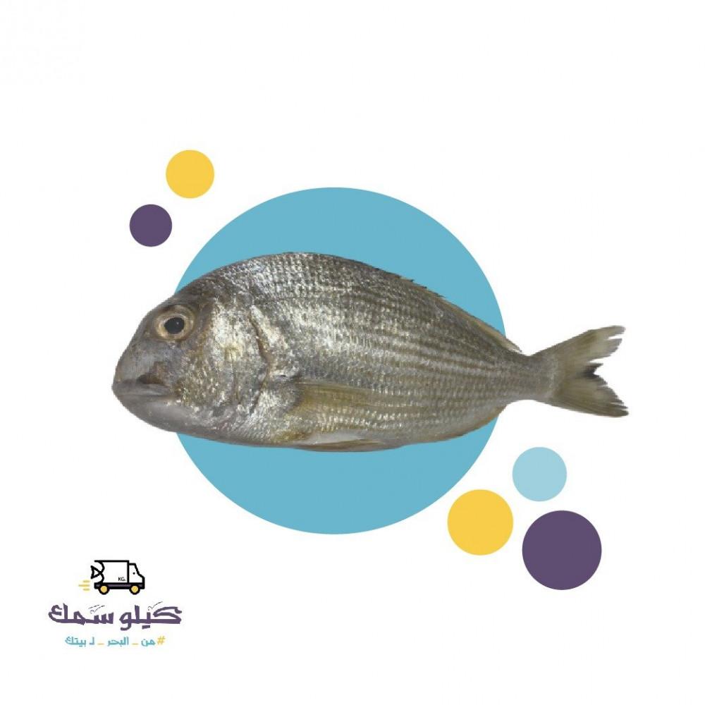 سمك قرقفان-Gurgufan