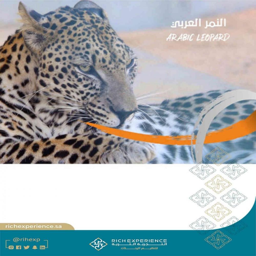 النمر العربي