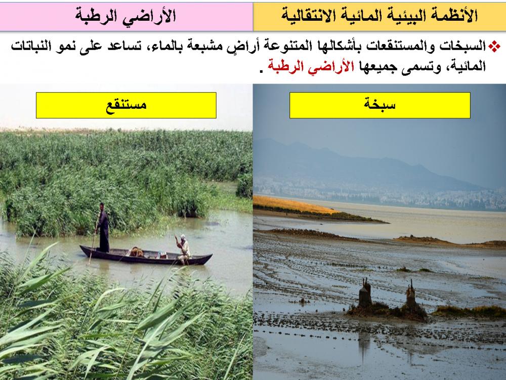 أوراق عمل علم البيئة
