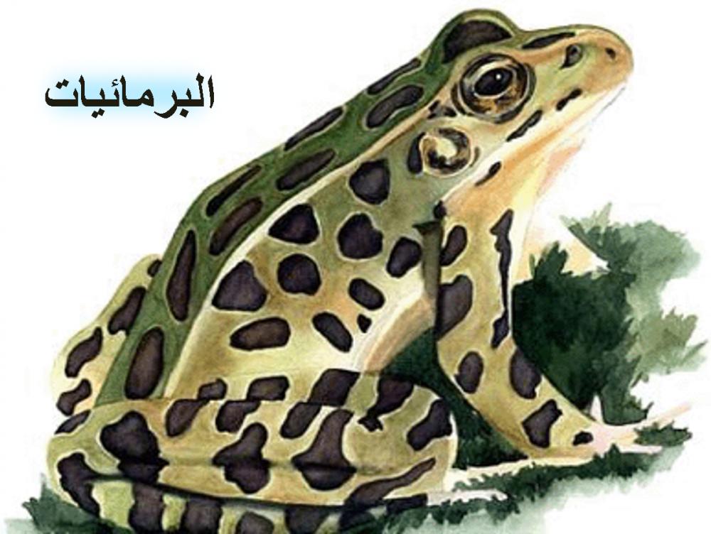تحضير واوراق العمل احياء 2 مقررات