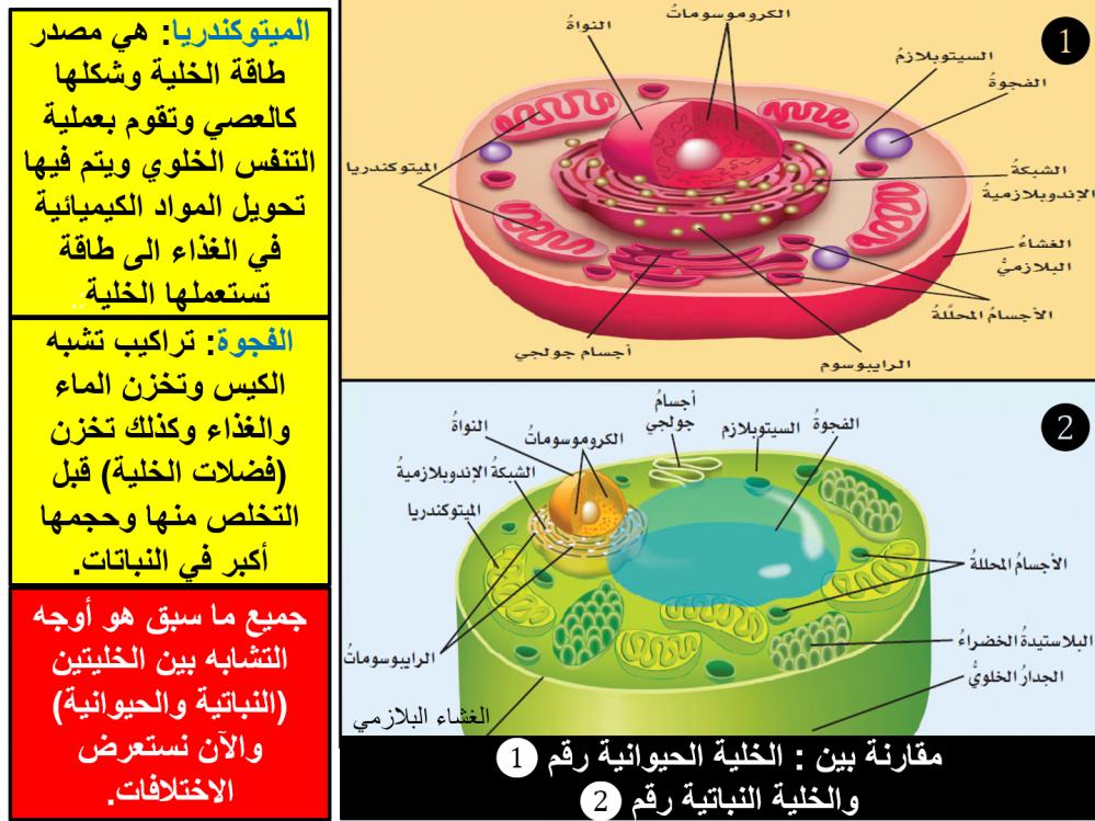 مقارنة الخلية النباتية والحيوانية