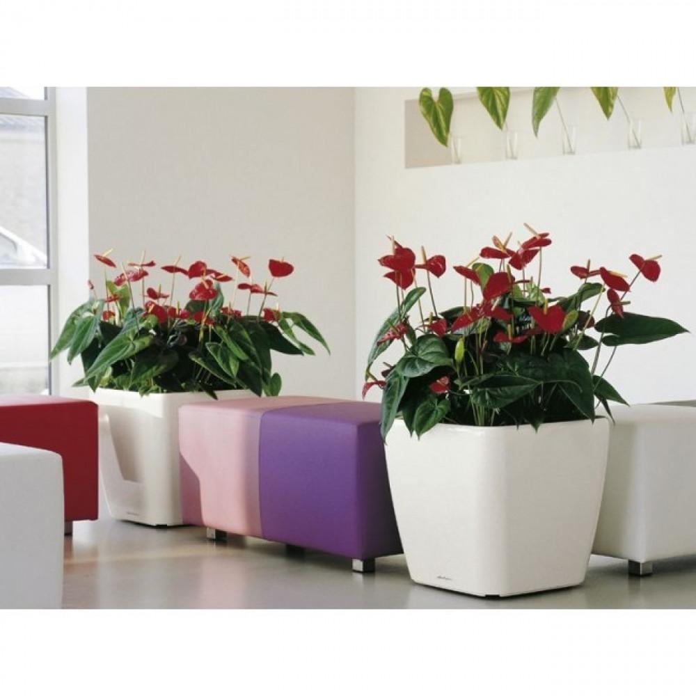حوض نبات بدون نظام ري Lechuza Quadro Premium