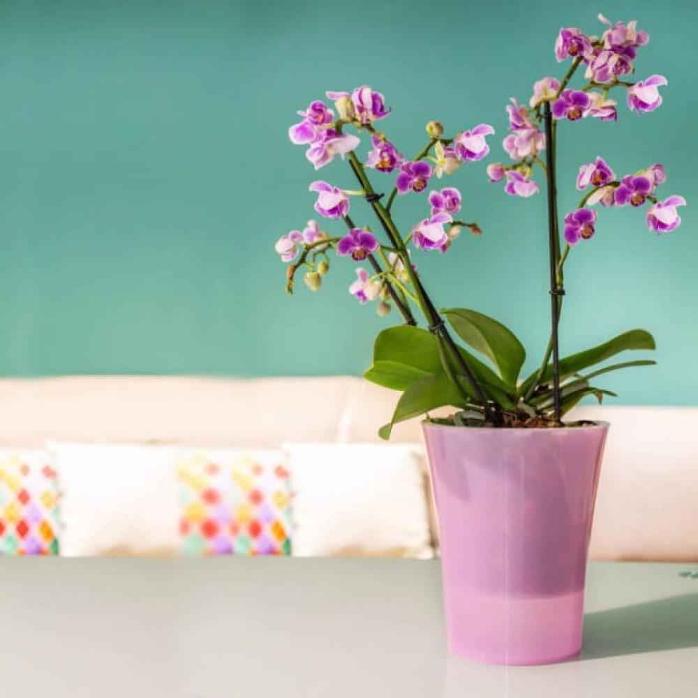 مراكن ري ذاتي اوروبي Santino Arte-Dea للنباتات الداخلية