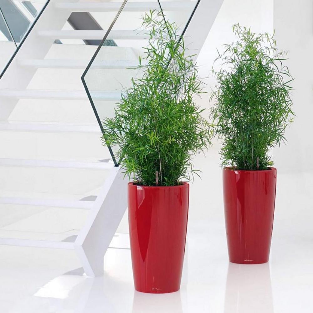 حوض نبات ذاتي الري  Lechuza Rondo Premium