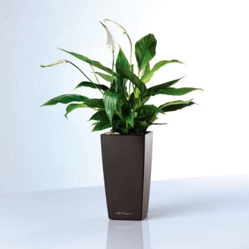 حوض نبات ذاتي الري Lechuza Mini Cubi Premium