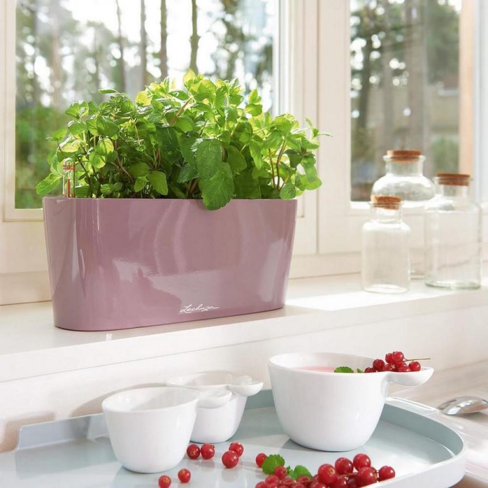حوض نبات ذاتي الري Lechuza Delta Premium Table