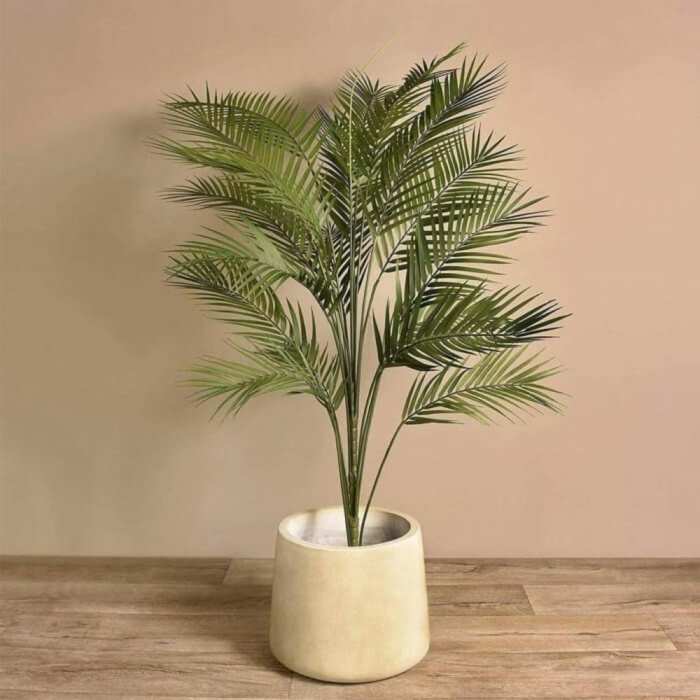 نباتات داخليه أريكا Areca Plant