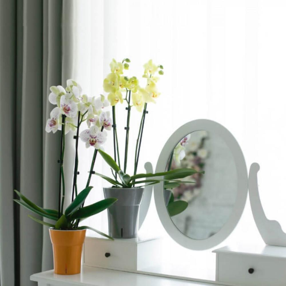 مراكن ري ذاتي اوروبي Santino Dali-Dea للنباتات الداخلية