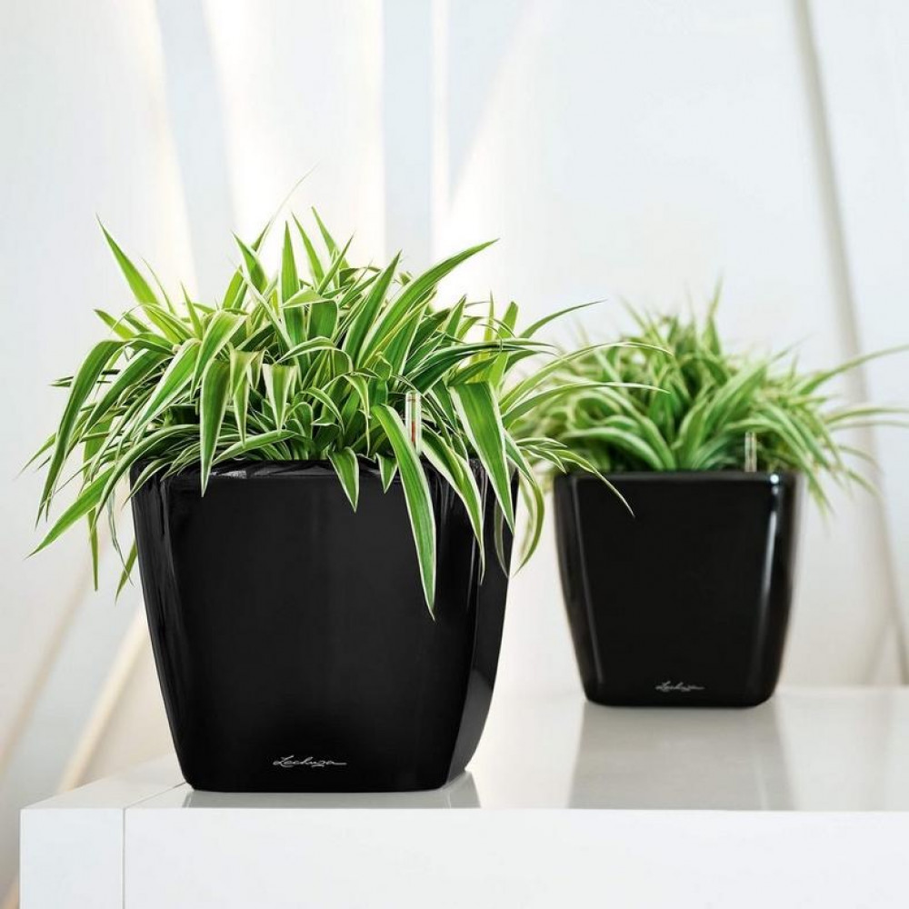 حوض نبات ذاتي الري Lechuza Quadro Premium LS