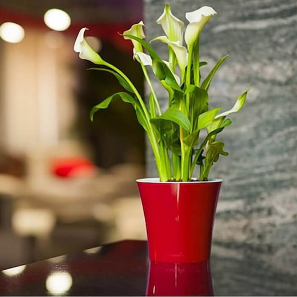 مراكن ري ذاتي اوروبي Santino Arte للنباتات الداخلية