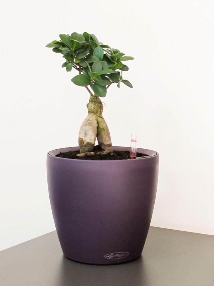 حوض نبات الماني ذاتي الري  Lechuza Classico Color LS