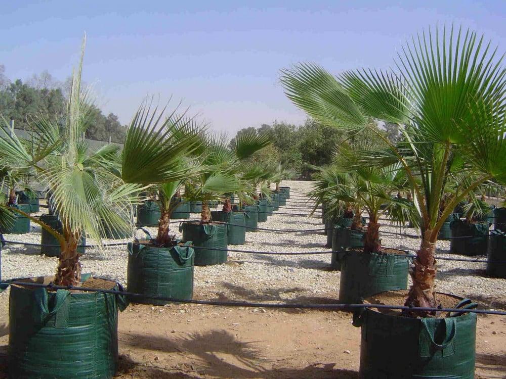 اكياس لزراعة الاشجار