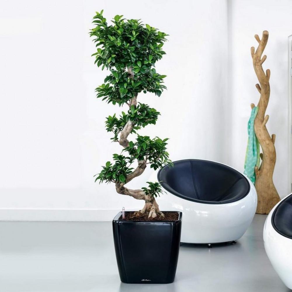 حوض نبات ذاتي الري Lechuza Quadro Premium