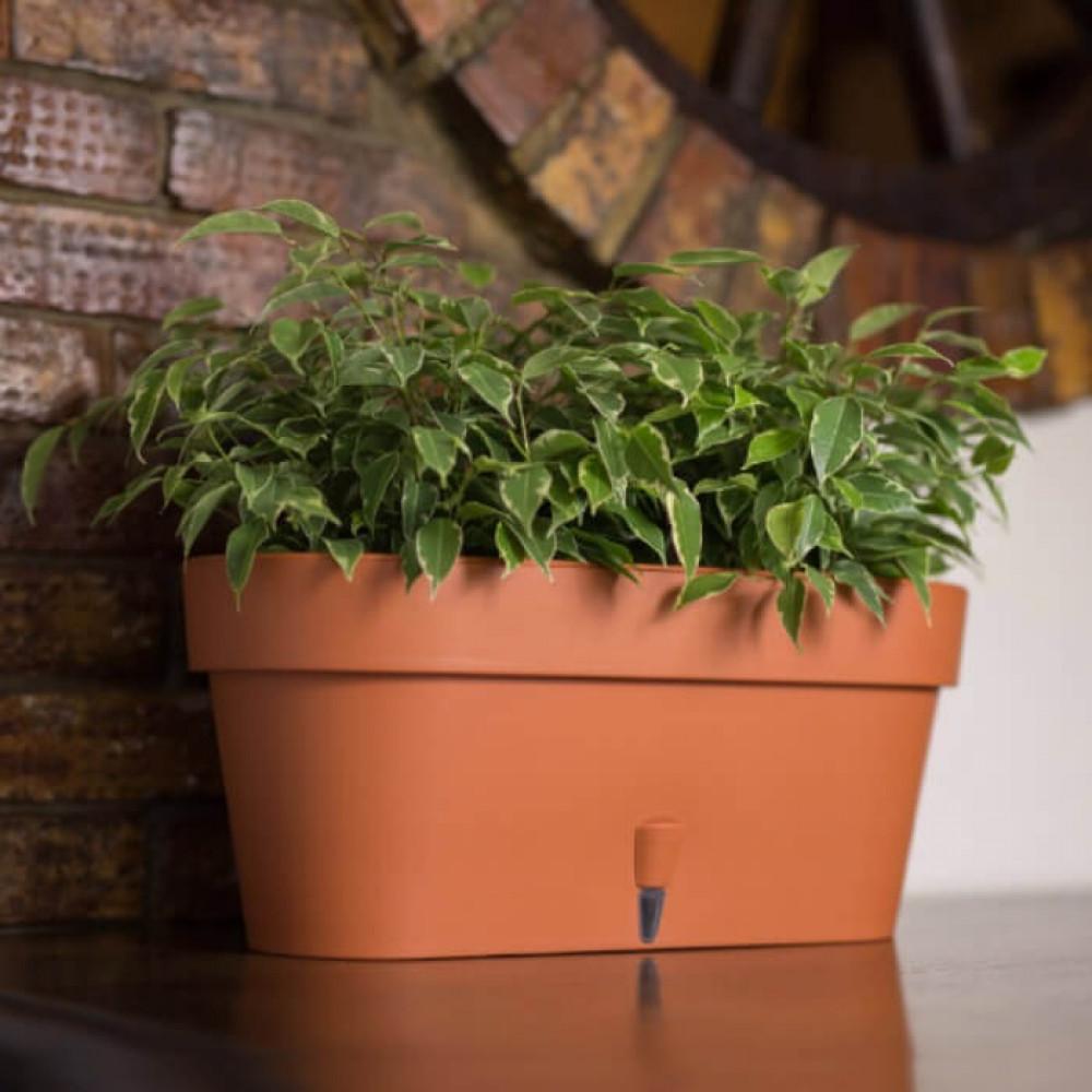 مراكن ري ذاتي اوروبي Santino Latina Window Box للنباتات الداخلية