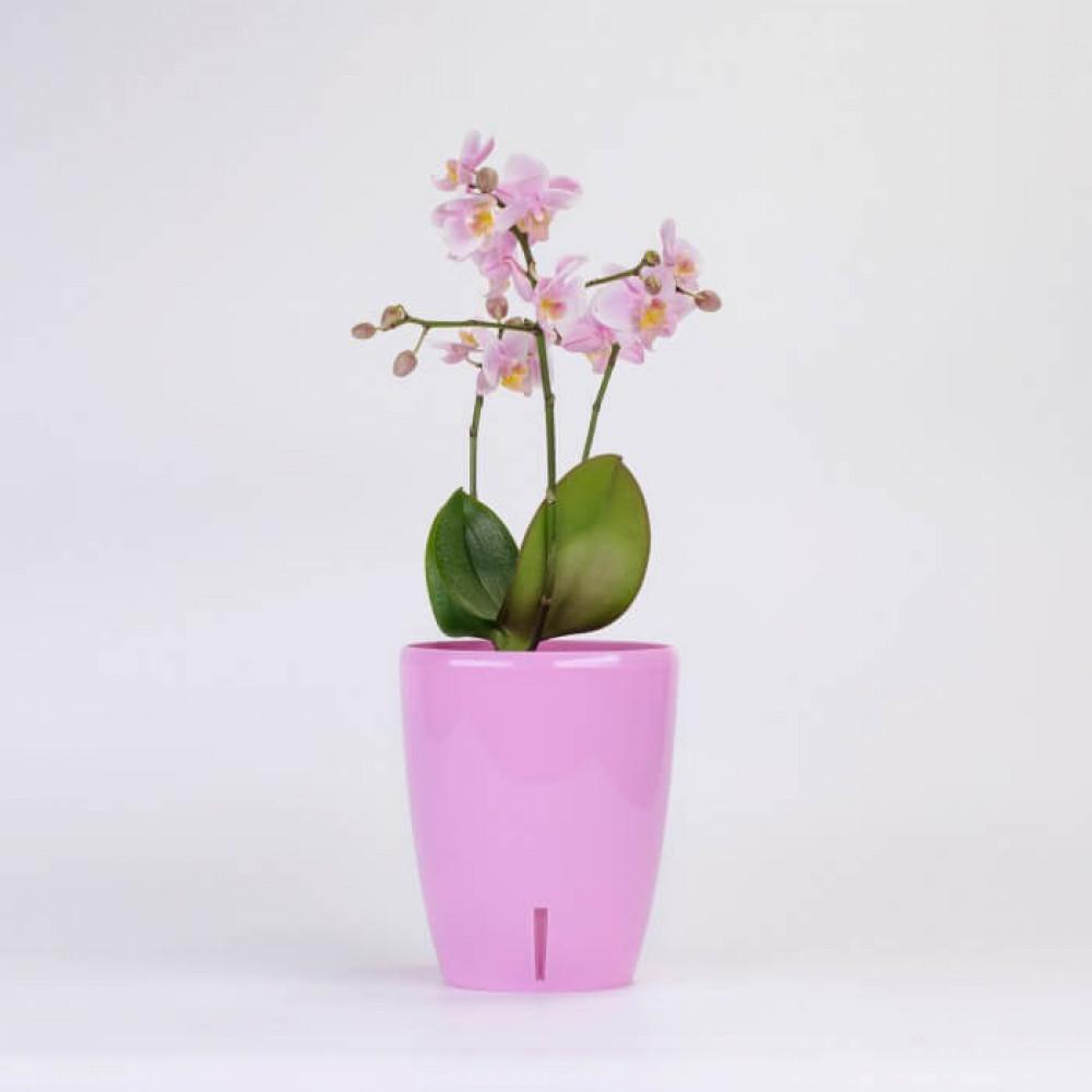 مراكن ري ذاتي اوروبي Santino Orchidea Twin للنباتات الداخلية
