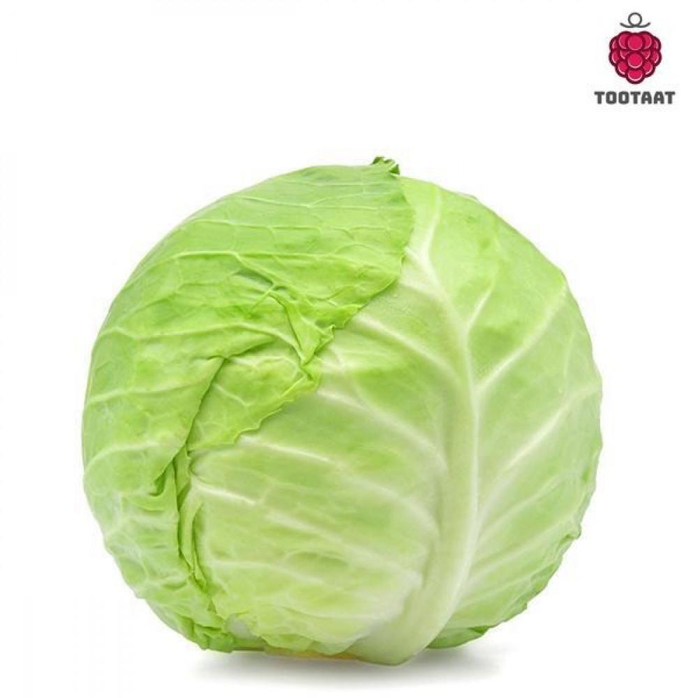 ملفوف أبيض White cabbage