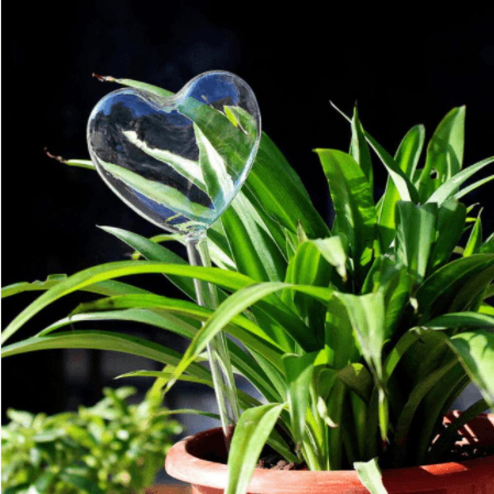 سقي ذاتي بالتنقيط لنباتات المنزلية