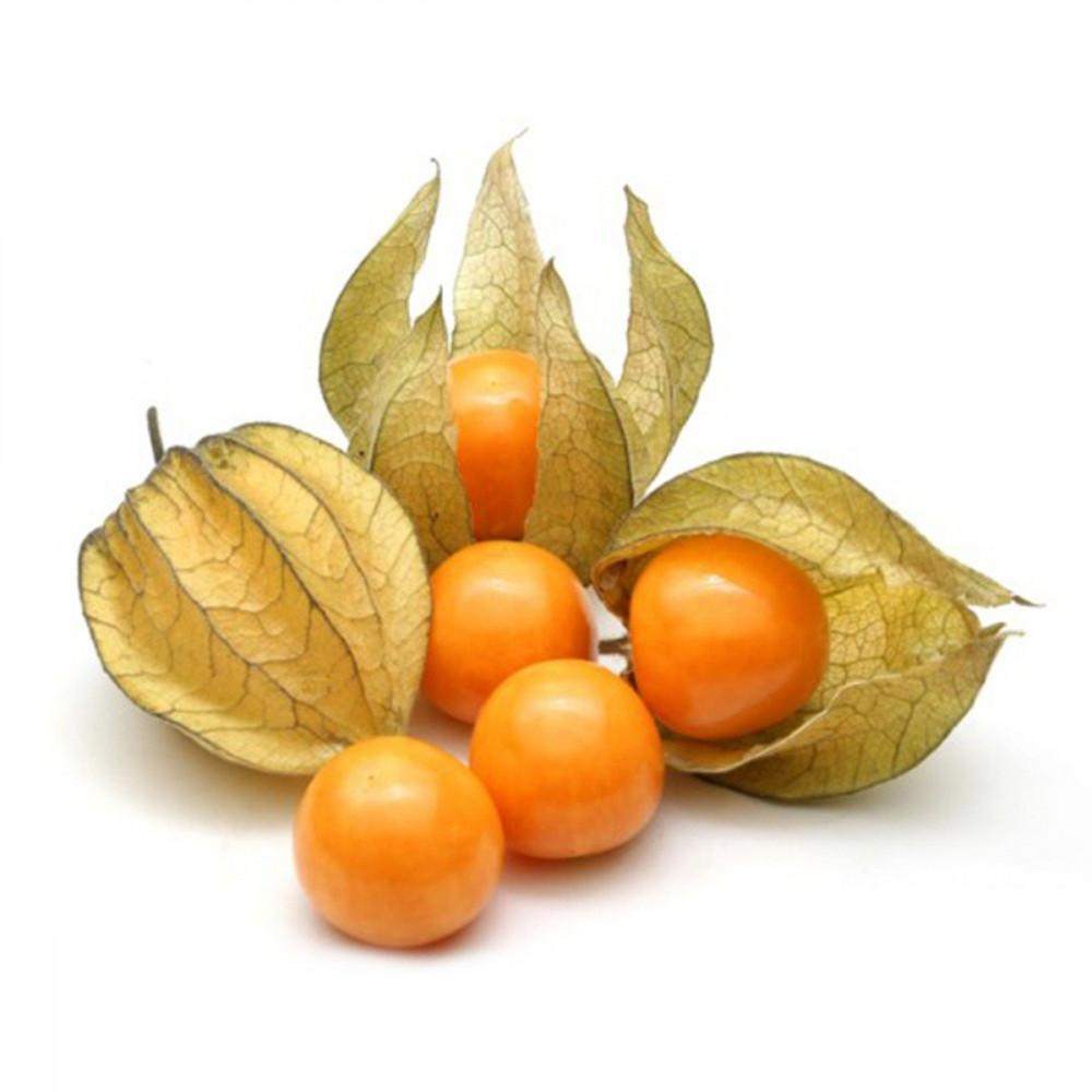 بذور نبات الحرنكش - Physalis