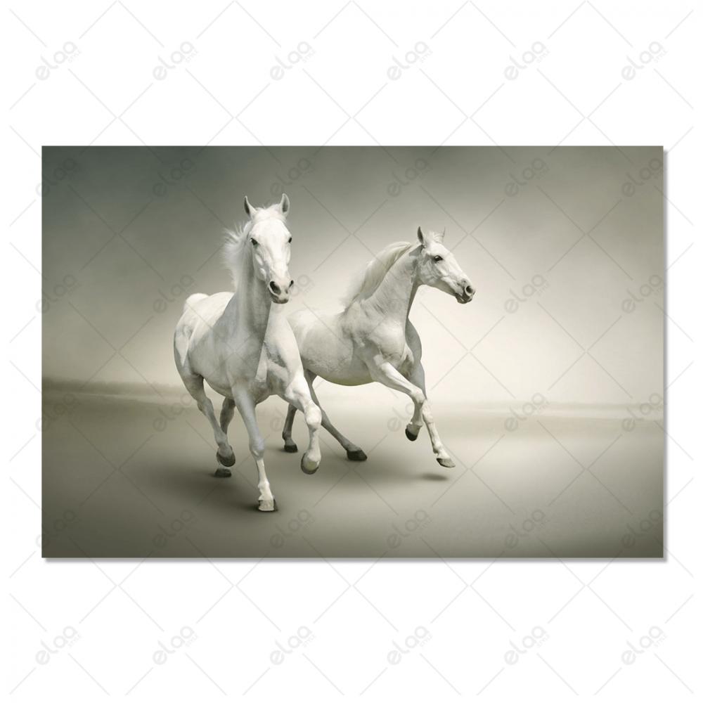 لوحة فنية لزوج احصنة بيضاء