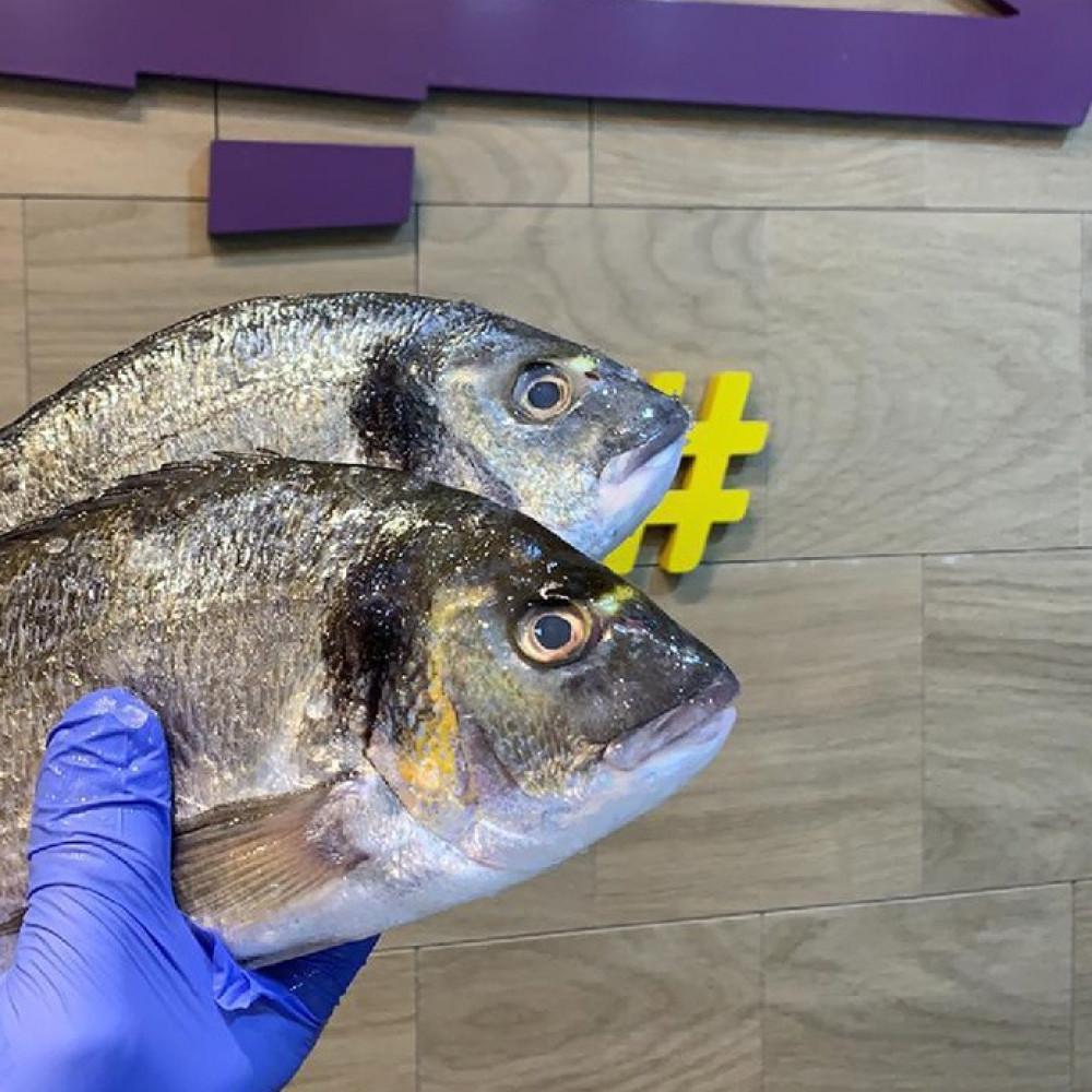 سمك سيبريم-Sea Bream