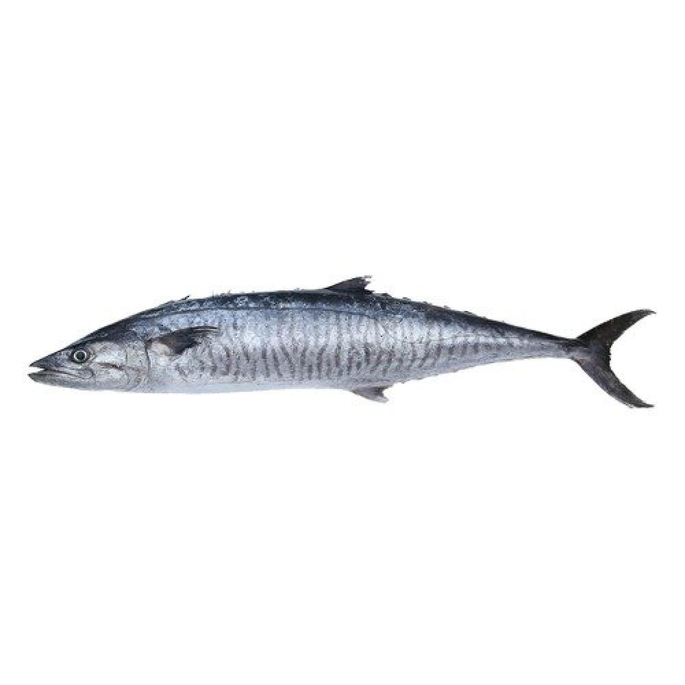 سمك كنعد طازج king fish سمكة كاملة توصيل