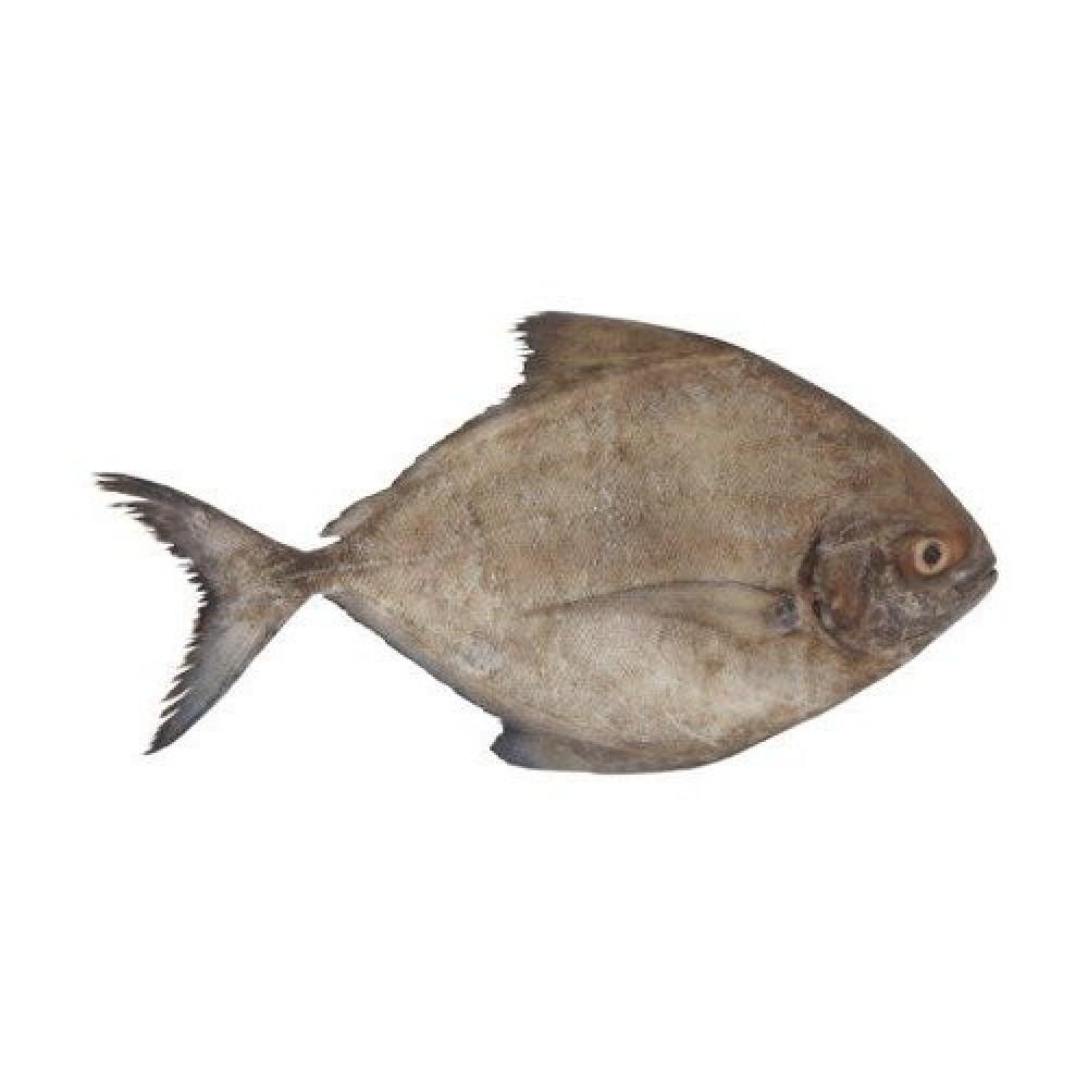 سمك زبيدي أسود pomfret