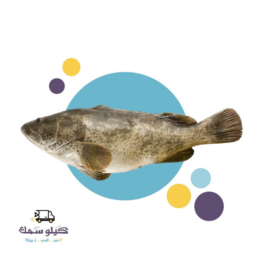 سمك هامور وسط-Hamour M
