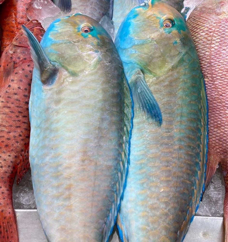 سمك حريد متجر صندوق سمكتي متجر اسماك في السعودية متجر اسماك في الرياض