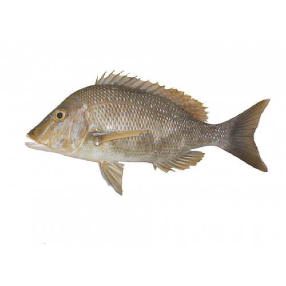 سمك شعور Lethrinus nebulosus