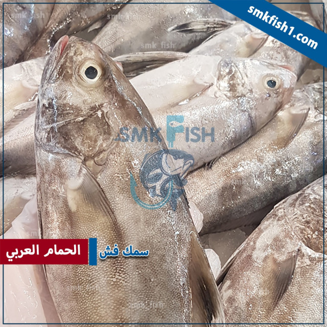 سمك الهامور بالانجليزي