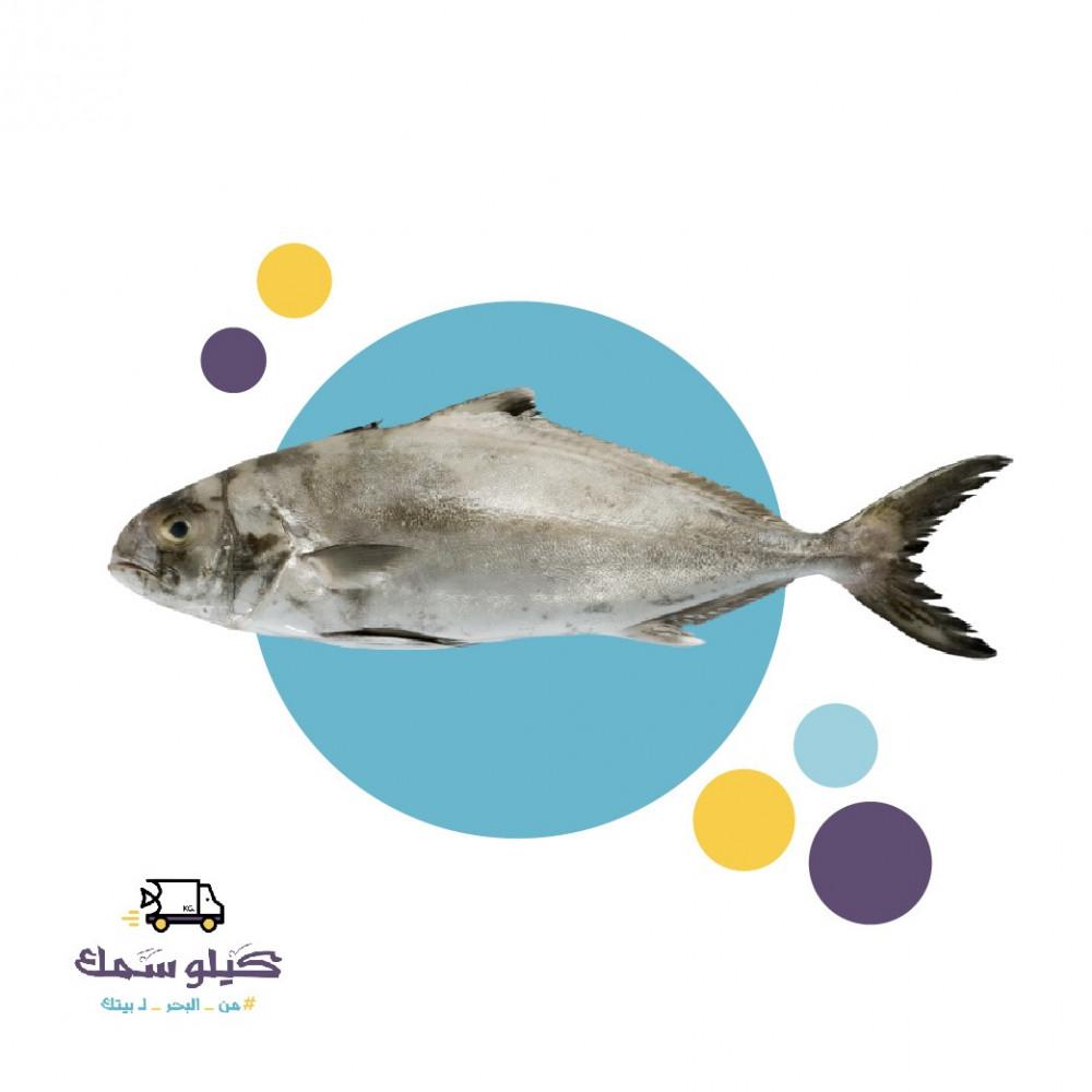 سمك حمام عربي
