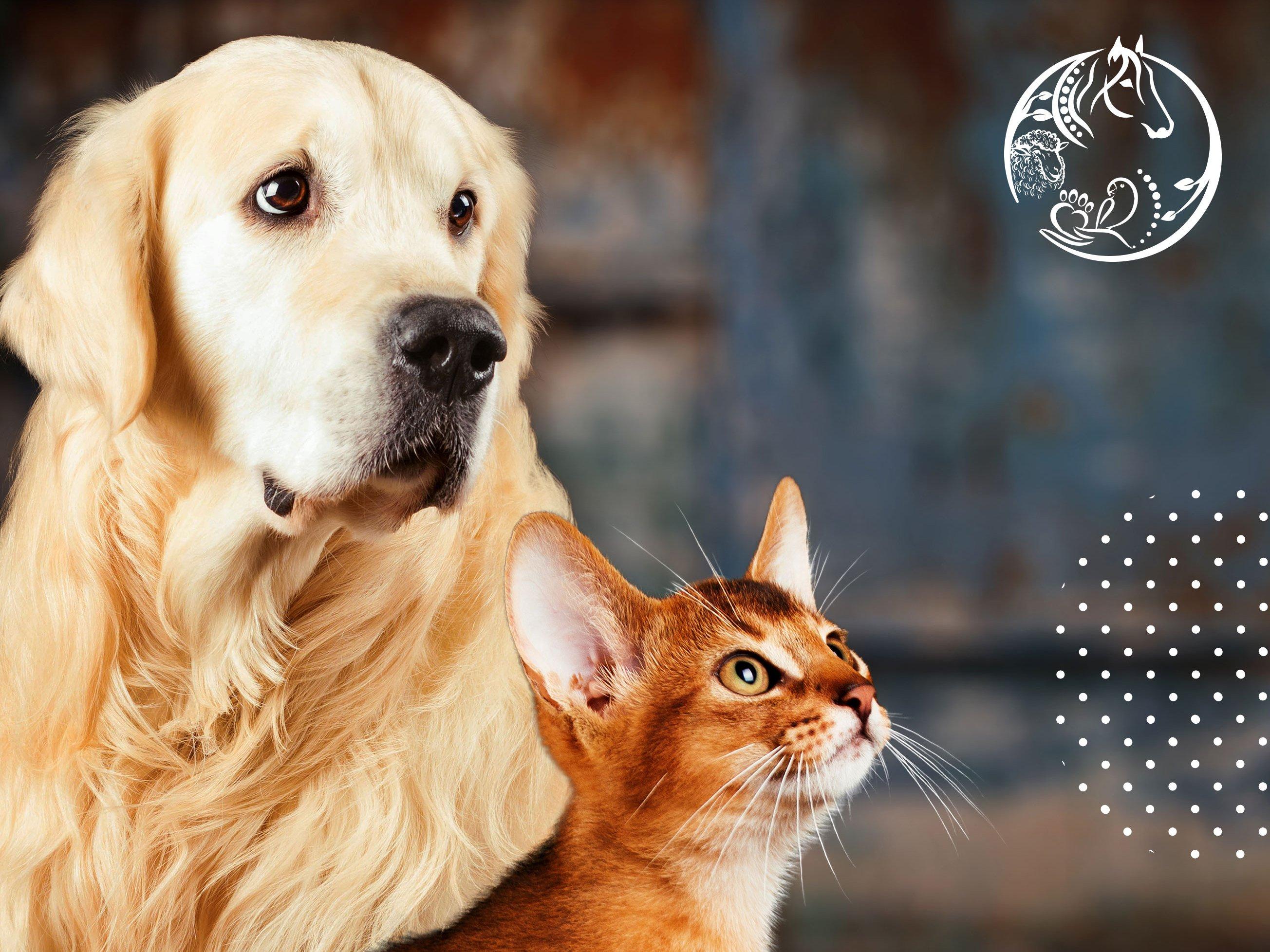 منتجات حيوانات أليفة