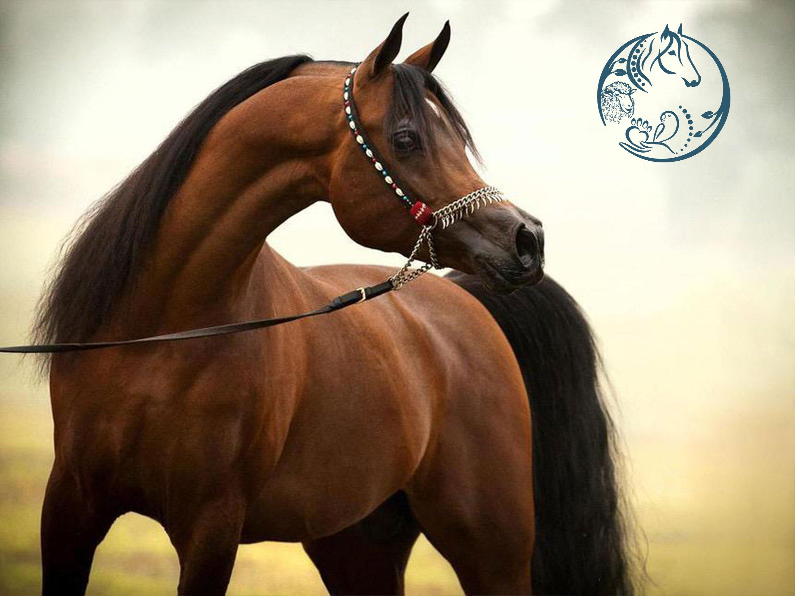 منتجات خيول