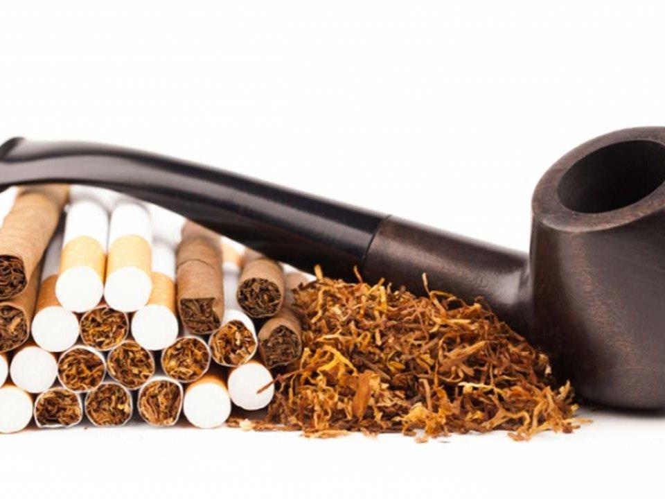 التبغ