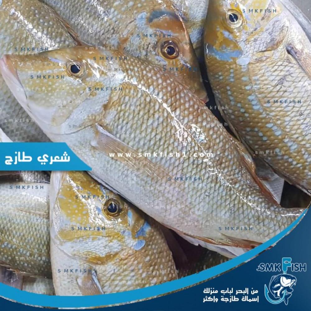 أيضا تحد إلهام طريقة تنظيف سمك الهامور Pleasantgroveumc Net