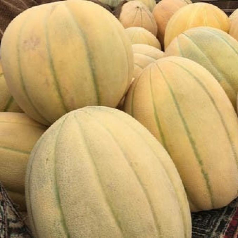 بذور البطيخ الحساوي