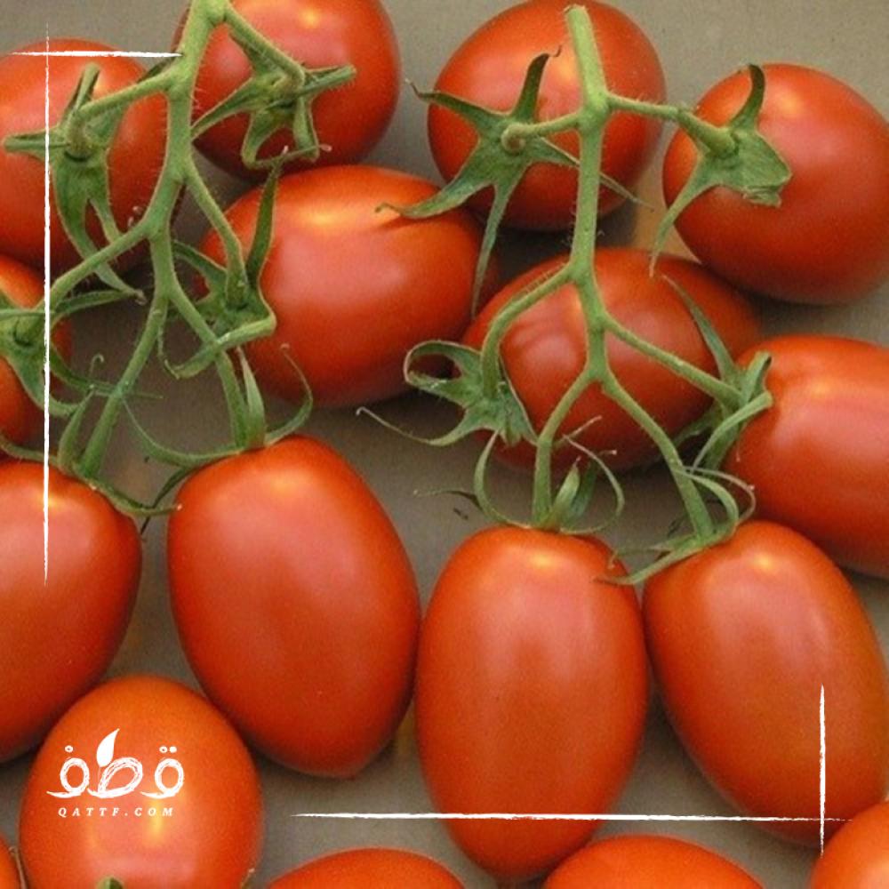 بذور الطماطم البلحية