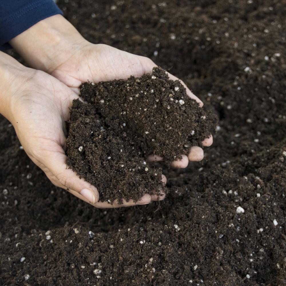 2 لتر تربة بيتموس مخصب  برلايت