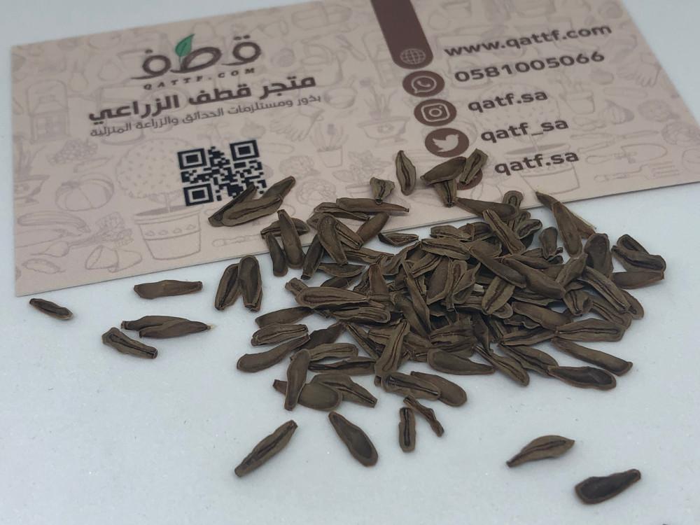 بذور شجرة المرخ العطرية -  Leptadenia pyrotechnica