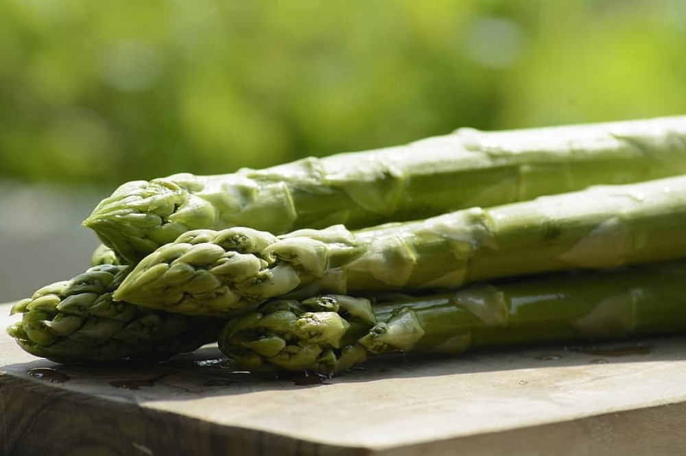 هليون - Asparagus officinalis