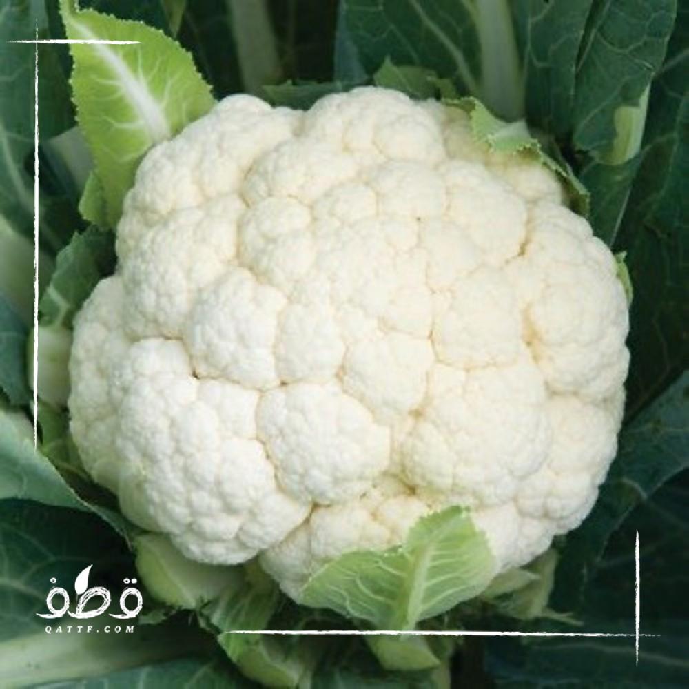 بذور زهرة قرنبيط  - Brassica oleracea var botrytis