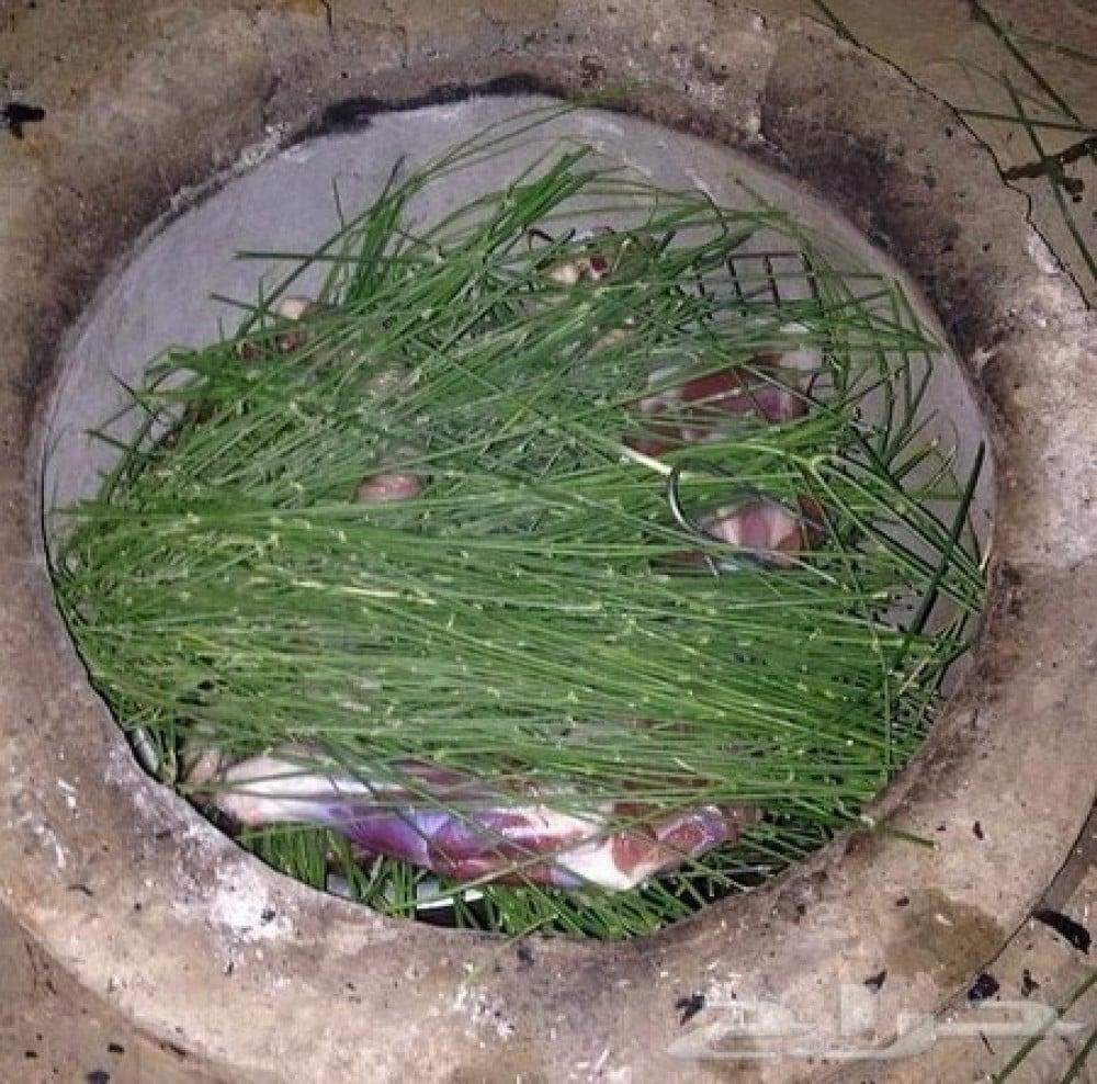 شجرة المرخ العطرية -  Leptadenia pyrotechnica