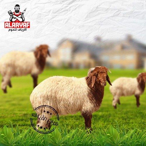 خروف نعيمي كبير مركز الأرياف للحوم